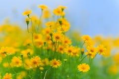 bluen blommar skyyellow Royaltyfri Foto