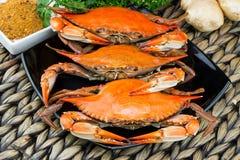 bluen fångar krabbor maryland Ångade krabbor Fånga krabbor festen Arkivfoto