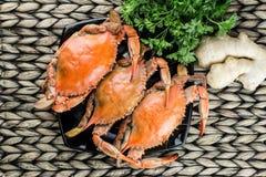 bluen fångar krabbor maryland Ångade krabbor Fånga krabbor festen Royaltyfri Foto