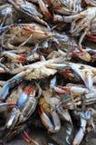 bluen fångar krabbor maryland Fotografering för Bildbyråer