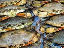 bluen fångar krabbor maryland Arkivfoto