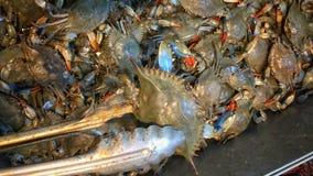 bluen fångar krabbor maryland Royaltyfri Bild