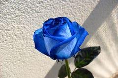 bluen steg Royaltyfri Bild