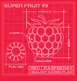 Blueprint diagram line drawing of a raspberry. Stock Images