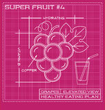 Blueprint diagram line drawing of red grapes. Stock Photo