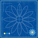 Blueprint of a flower Royalty Free Stock Photos