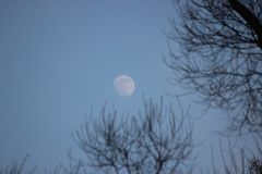 Bluer, the moon is tangled in the branches of a tree. full moon against blue sky and black branches without leaves. autumn or. Bluer, the moon is tangled in stock photography