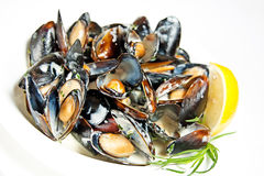 Blueshell mussels in white wine Stock Photos