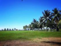 BlueSky; Baywalk; PalmTrees; Plaża; GreenField; obrazy stock
