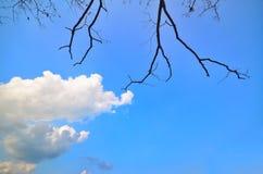 Bluesky och trädsikt Arkivfoto