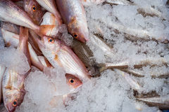 Bluespotted seabream in local market Stock Photography