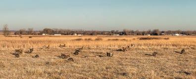 Bluestem Naukowy i Naturalny teren, Minnestoa Zdjęcie Stock
