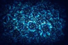 Bluetiful rośliny zdjęcie stock