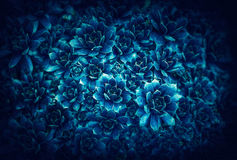 Bluetiful rośliny fotografia royalty free
