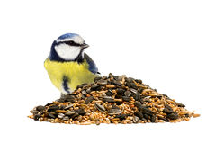 Bluetit with bird seeds Royalty Free Stock Photos