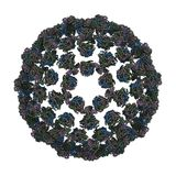 Bluetongue Virus (BTV) Stock Image