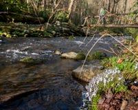 Bluette Flowers Near Log Bridge images stock