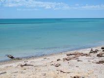 Bluff di Eagle, baia dello squalo, Australia occidentale Immagine Stock