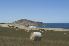 The Bluff and Field of Hay Bales, Kings Beach, Fleurieu Peninsul. Field of large round hay bales situated at Kings Beach, Victor Harbor, Fleurieu Peninsula Royalty Free Stock Photo
