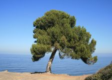 Blufftop Panorama. Lone tree on a bluff by the ocean, California Royalty Free Stock Image