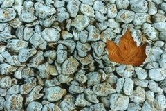 The bottom of the pool is covered with white pebbles and a yellow leaf floating on the surface stock photo