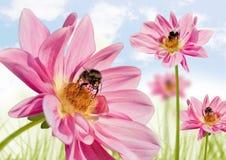 Blumbees 1 Imagenes de archivo
