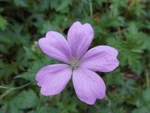 Blume 🌸 Stockfoto