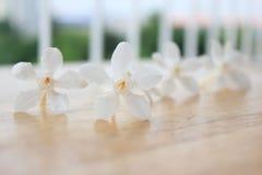 Blume über unscharfem Hintergrund Stockbild