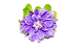 Blume über Weiß Stockbild