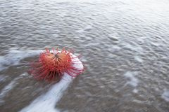 Blume überflutet durch Welle mit Schaum und Linien Lizenzfreie Stockbilder