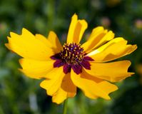 Blume 10 Lizenzfreies Stockbild