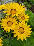 Blume Στοκ Εικόνες