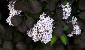 Blume 003 Stockfotografie