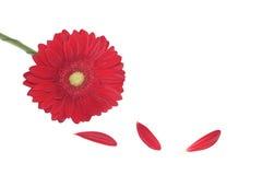 Blume Lizenzfreie Stockbilder