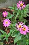 Blume lizenzfreies stockfoto