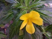 Blume 2 stockfotos