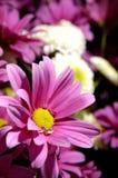Blume 16 Stockbild