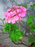 Blume 2 Stockfoto
