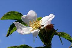 Blume 21 Stockfoto