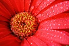 Blume 2 lizenzfreie stockfotografie