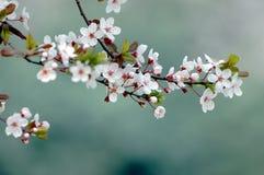 Blume Stockfotos