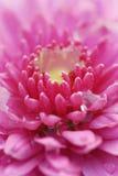 Blume 5 stockbild