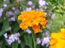 Blume Stockbild