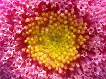 Blume. Lizenzfreie Stockfotografie