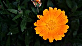 Blume Stockfotos
