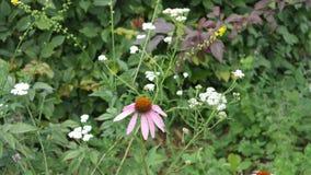 Blume Стоковое Изображение