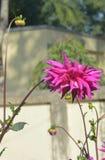 Blume Lizenzfreies Stockbild