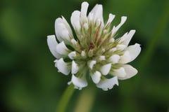 Blume lizenzfreie stockfotografie