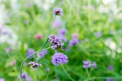 Blume, Abschluss oben, Hintergrund Stockfotos