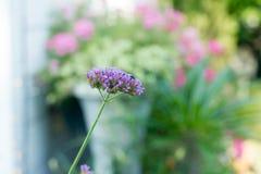 Blume, Abschluss oben, Hintergrund Stockbild